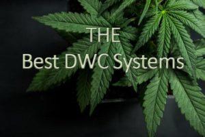 dwc system